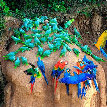 chuncho macaw and sandoval lake 2