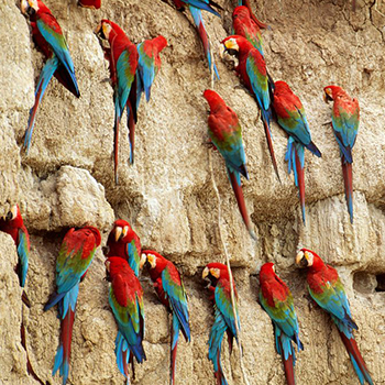 chuncho macaw and sandoval lake